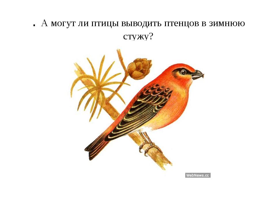 . А могут ли птицы выводить птенцов в зимнюю стужу?