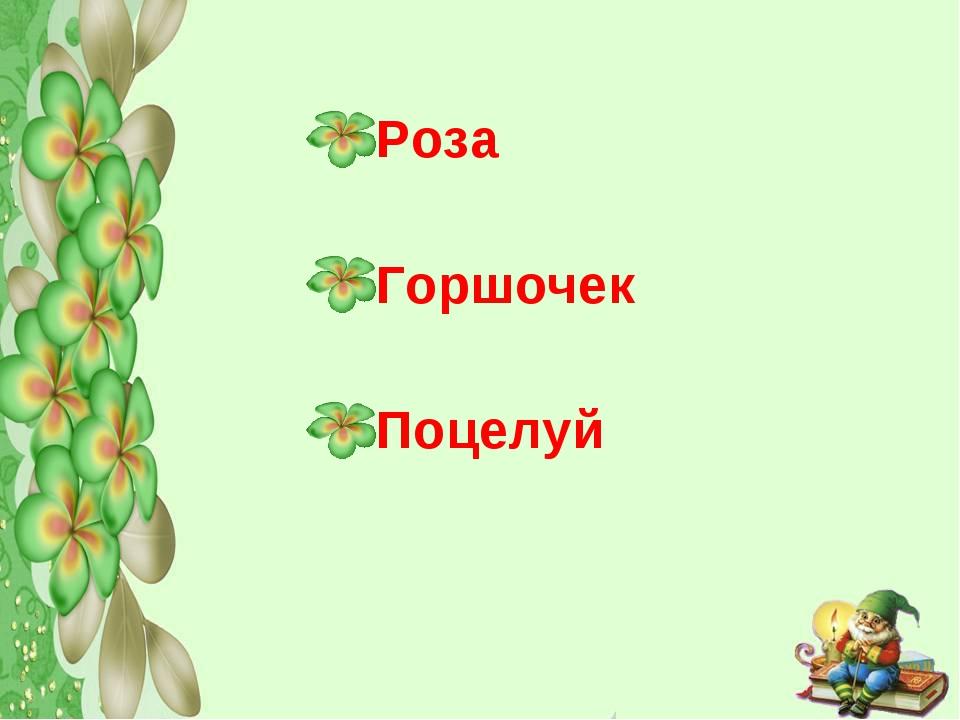 Роза Горшочек Поцелуй