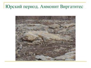 Юрский период. Аммонит Виргатитес