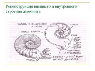Реконструкция внешнего и внутреннего строения аммонита