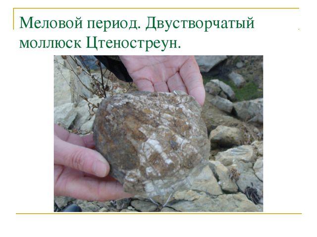 Меловой период. Двустворчатый моллюск Цтеностреун.