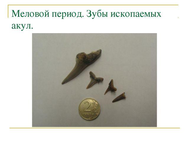 Меловой период. Зубы ископаемых акул.