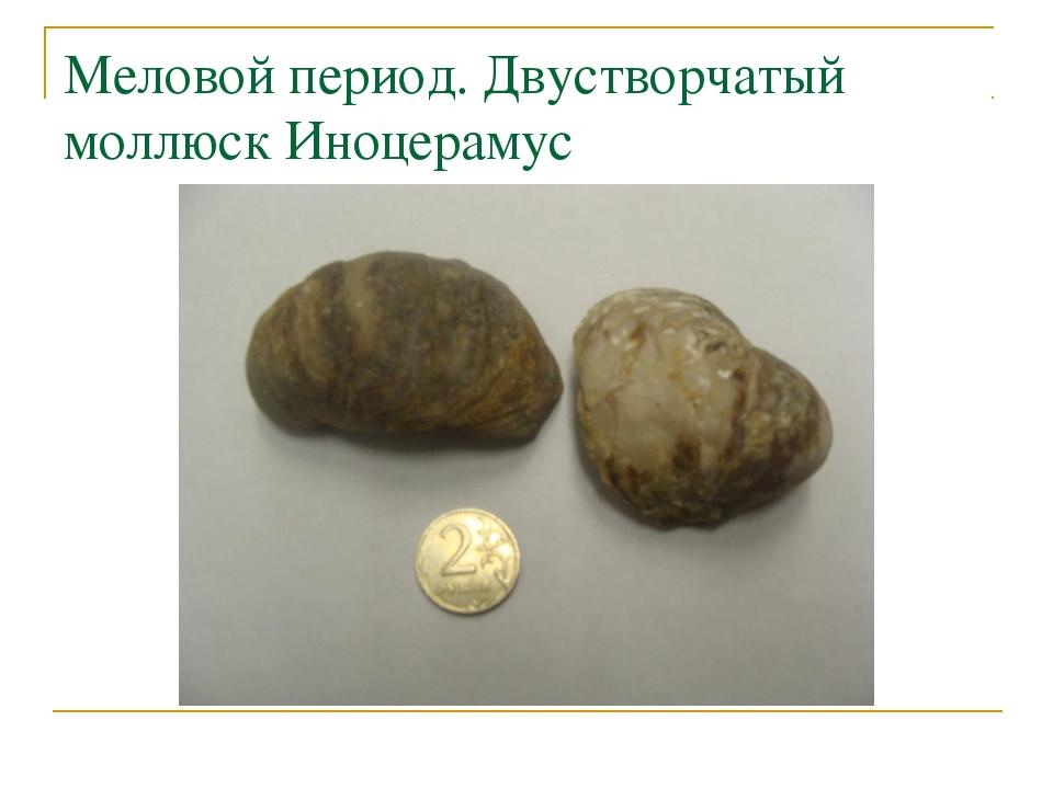 Меловой период. Двустворчатый моллюск Иноцерамус
