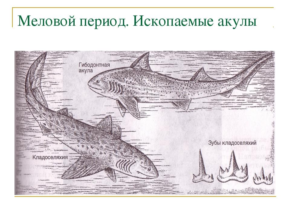 Меловой период. Ископаемые акулы