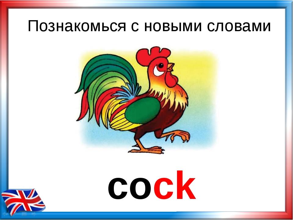 Познакомься с новыми словами cock