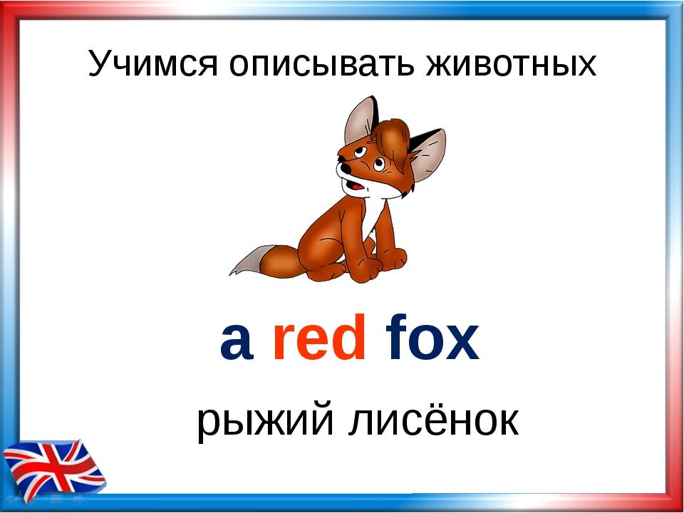 Учимся описывать животных a red fox рыжий лисёнок