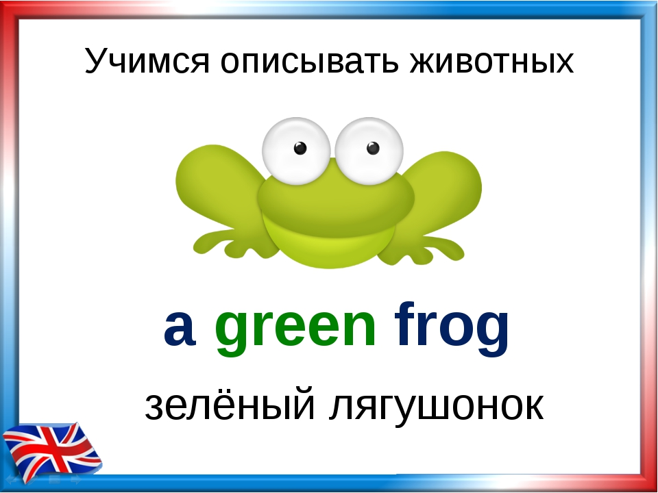 Учимся описывать животных a green frog зелёный лягушонок