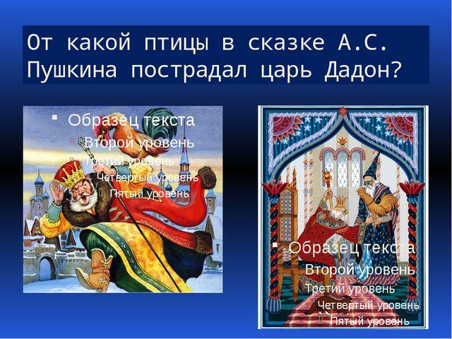 От какой птицы в сказке А.С. Пушкина пострадал царь Дадон?