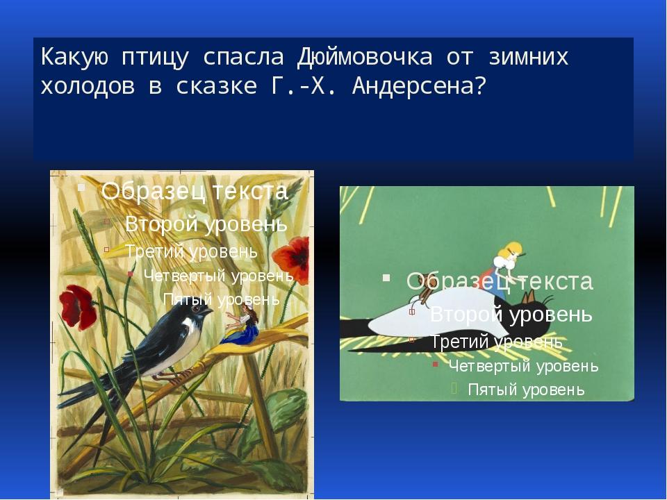 Какую птицу спасла Дюймовочка от зимних холодов в сказке Г.-Х. Андерсена?