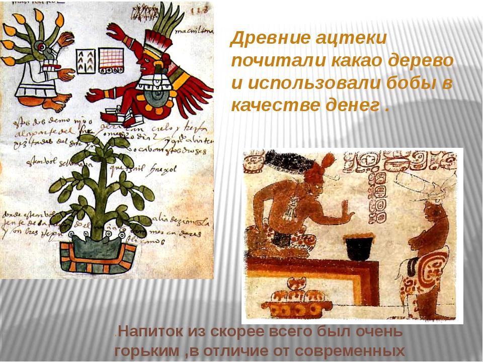Древние ацтеки почитали какао дерево и использовали бобы в качестве денег . ....