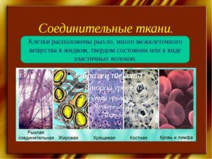 Соединительные ткани. Клетки расположены рыхло, много межклеточного вещества