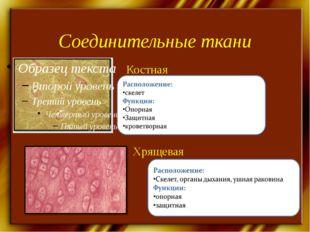 Соединительные ткани Хрящевая Костная