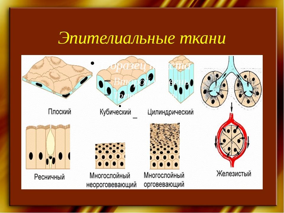 Эпителиальные ткани