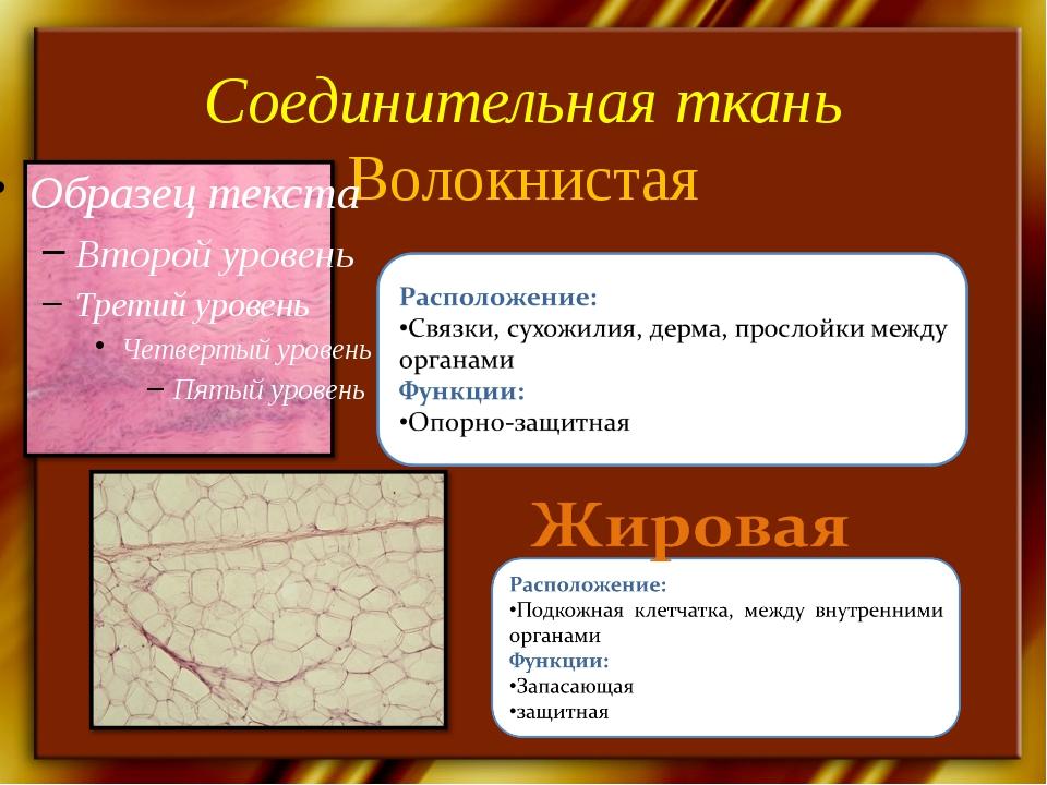 Соединительная ткань Волокнистая