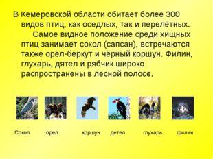 В Кемеровской области обитает более 300 видов птиц, как оседлых, так и перелё