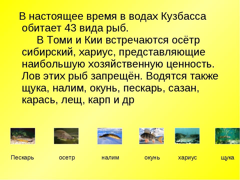 В настоящее время в водах Кузбасса обитает 43 вида рыб.  В Томи и Кии в...
