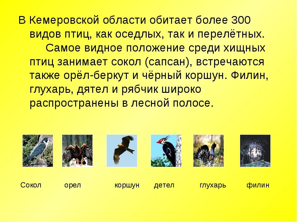 В Кемеровской области обитает более 300 видов птиц, как оседлых, так и перелё...