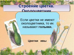 Строение цветка. Околоцветник Если цветки не имеют околоцветника, то их назыв