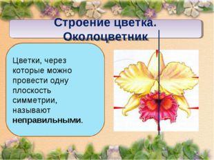 Строение цветка. Околоцветник Цветки, через которые можно провести одну плоск