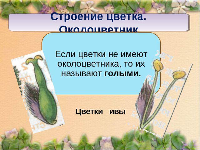 Строение цветка. Околоцветник Если цветки не имеют околоцветника, то их назыв...