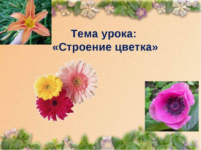 Тема урока: «Строение цветка»