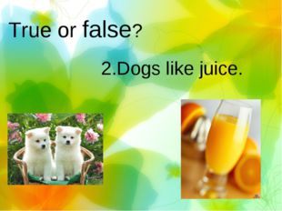 True or false? 2.Dogs like juice.
