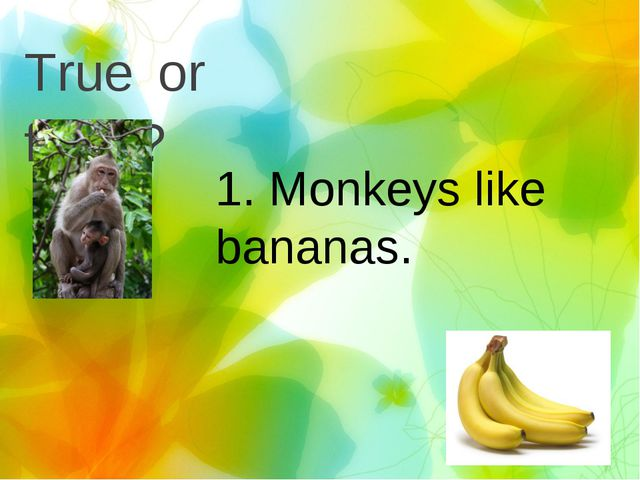 True or false? 1. Monkeys like bananas.
