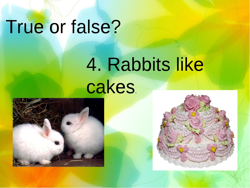True or false? 4. Rabbits like cakes.