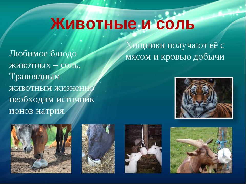 Животные и соль Любимое блюдо животных – соль. Травоядным животным жизненно н...