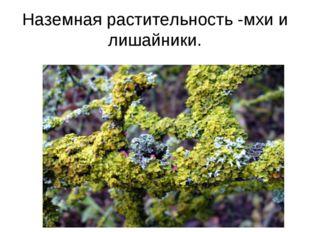 Наземная растительность -мхи и лишайники.