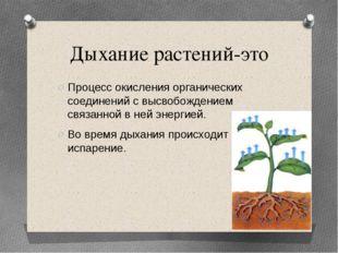 Дыхание растений-это Процесс окисления органических соединений с высвобождени