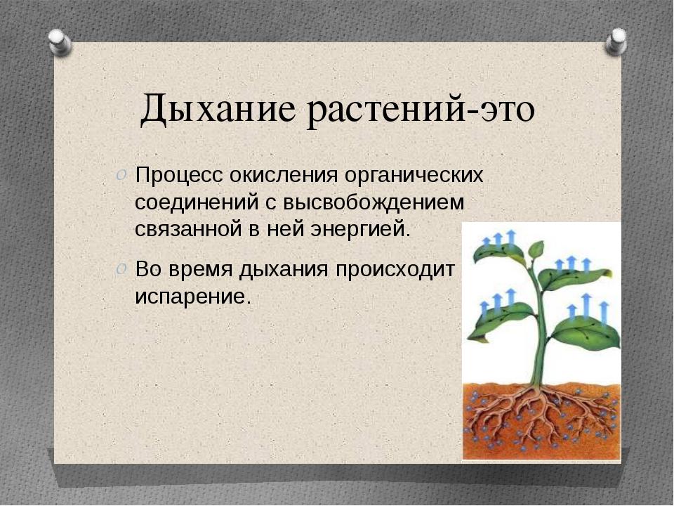 Дыхание растений-это Процесс окисления органических соединений с высвобождени...