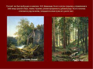 Русский лес был пробужден в живописи И.И. Шишкиным. На его холстах открылась