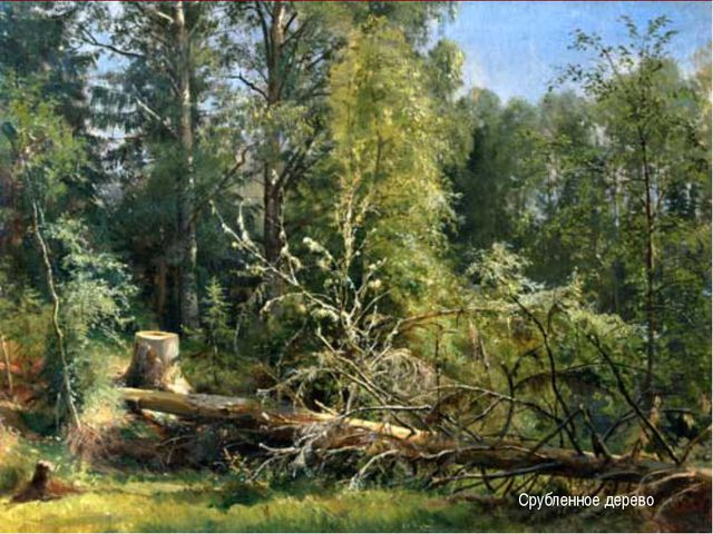 Срубленное дерево