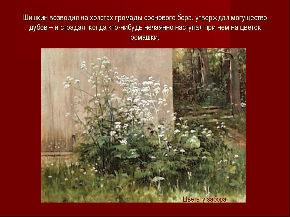 Шишкин возводил на холстах громады соснового бора, утверждал могущество дубов...
