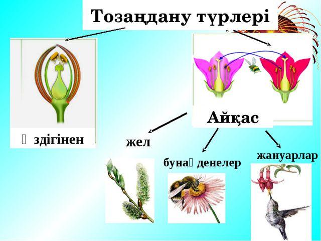 1. Тозаңдану 2. Жатынға түсуі 3. Ұрықтану 4. Жеміс және тұқым Гүлді өсімдікт...