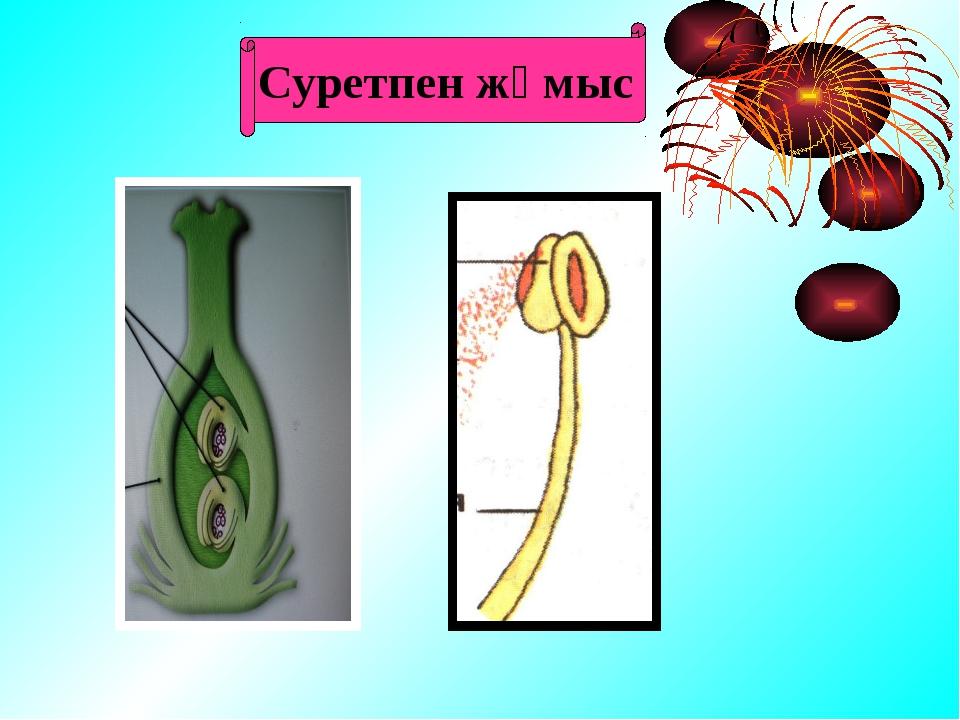 Сабақтың мақсаты Білімділік: Өсімдіктің көбею мүшелерін жүйелеу, көбею мүшел...