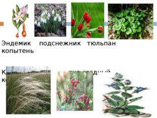 Эндемик подснежник тюльпан копытень Ковыль тис ягодный колокольчик