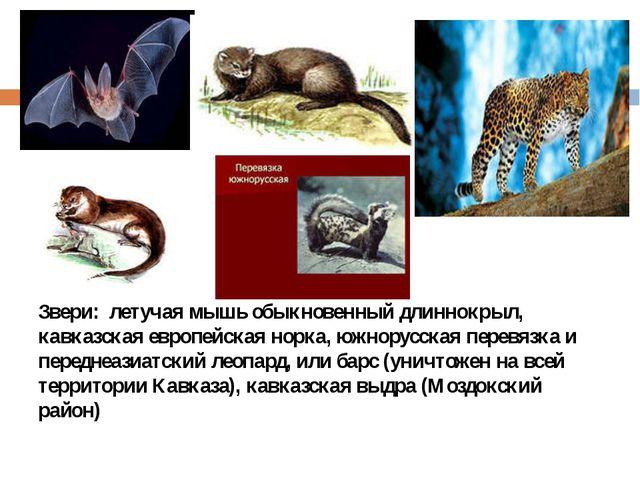 Звери: летучая мышь обыкновенный длиннокрыл, кавказская европейская норка, ю...