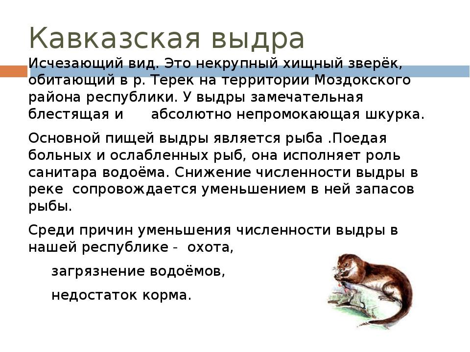 Кавказская выдра Исчезающий вид. Это некрупный хищный зверёк, обитающий в р....