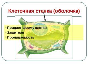 Клеточная стенка (оболочка) Придает форму клетки Защитная Проницаемость