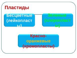 Пластиды Бесцветные (лейкопласты) Зеленые (хлоропласты) Красно-оранжевые (хро