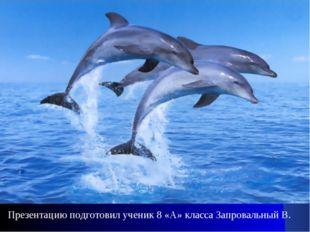 Презентацию подготовил ученик 8 «А» класса Запровальный В.