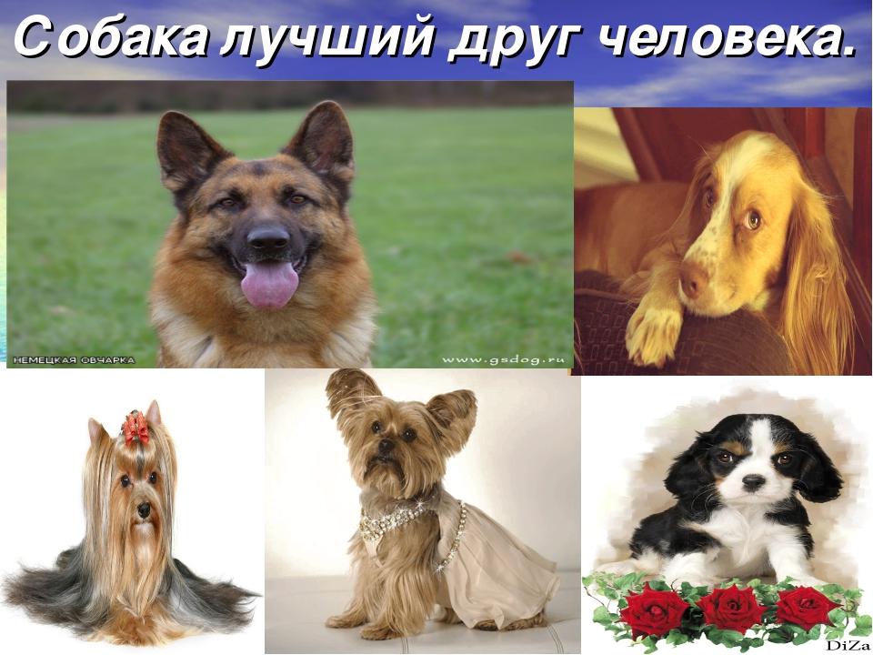 Собака лучший друг человека.
