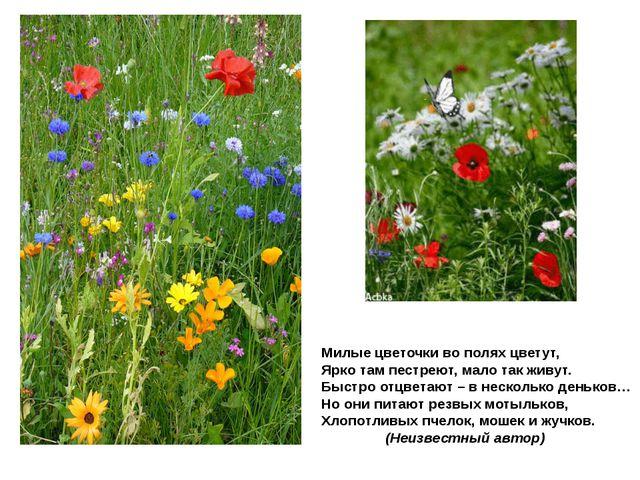 Милые цветочки во полях цветут, Ярко там пестреют, мало так живут. Быстро отц...