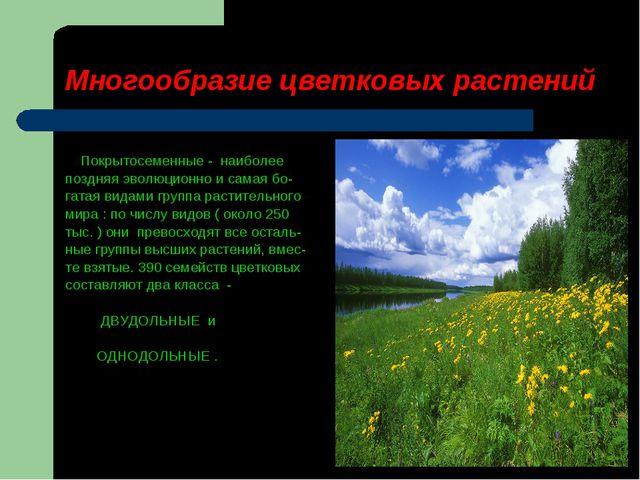 Многообразие цветковых растений Покрытосеменные - наиболее поздняя эволюционн...