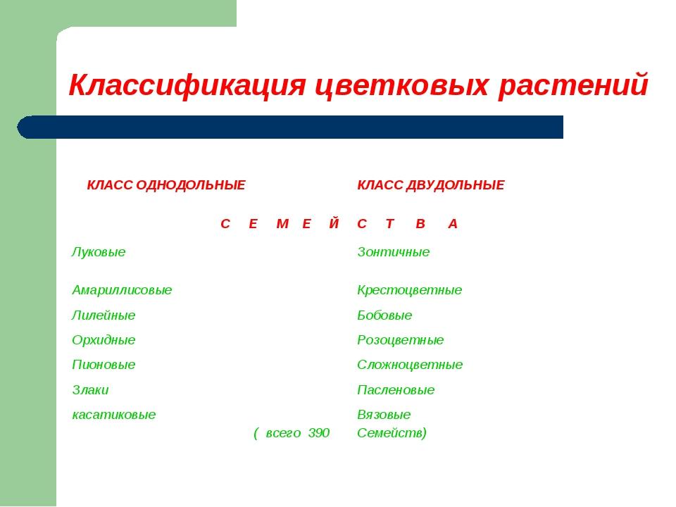 Классификация цветковых растений КЛАСС ОДНОДОЛЬНЫЕ КЛАСС ДВУДОЛЬНЫЕ С Е М Е...
