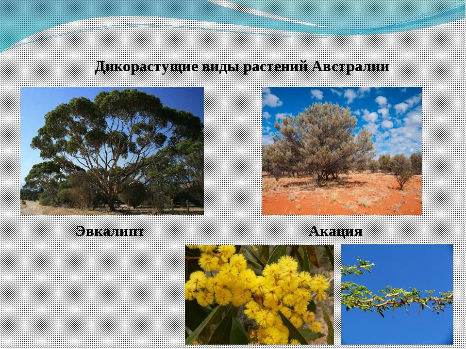 Растения австралии картинки и названия