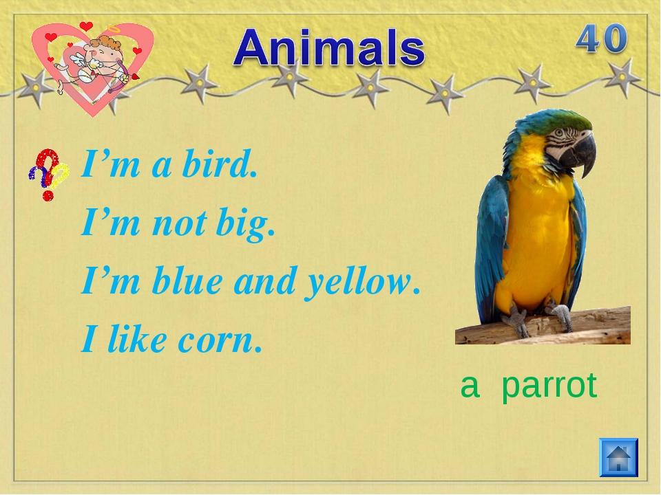 I'm a bird. I'm not big. I'm blue and yellow. I like corn. a parrot