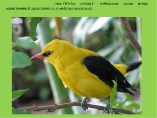 Обыкнове́нная и́волга(лат.Oriolus oriolus)- небольшая яркая птица, единств